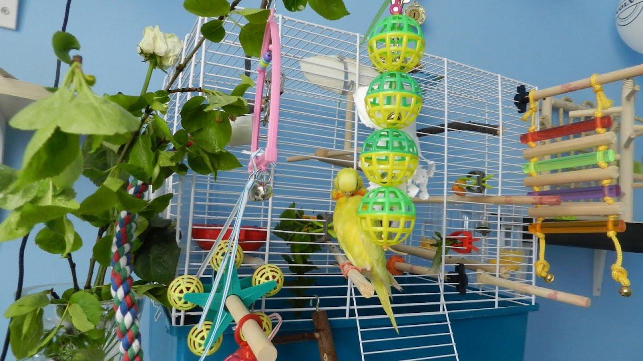 Развивающие игрушки для больших, волнистных попугаев, ара, корелла, неразлучников, канареек, птиц: качели, кольца, зеркала. Купить. Игрушка для попугая, подвешивается в клетке. Волнистые попугаи очень активные и социальные существа, которые просто не могут долго сидеть без дела.