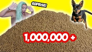 SURPRISING  My Dog With 1,000,000 Pieces of DOG FOOD!!!