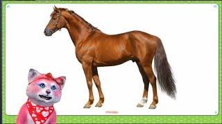 Домашние животные - карточки для малышей - Няша Мурмяша