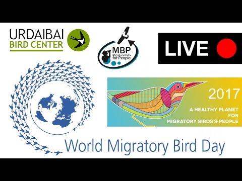 World Migratory Bird Day - 2017