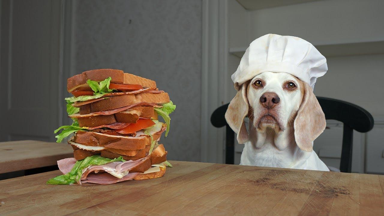 Dog Makes Sandwiches & Cinnamon Rolls: Funny Dog Maymo