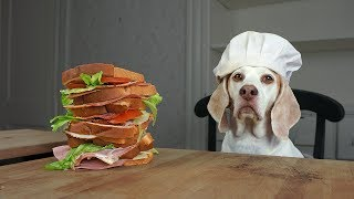 dog-makes-sandwiches-cinnamon-rolls-funny-dog-maymo