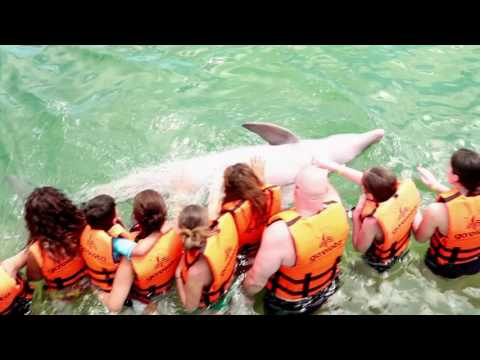 Cuba Travel Network Catamaran and Dolphins Tour