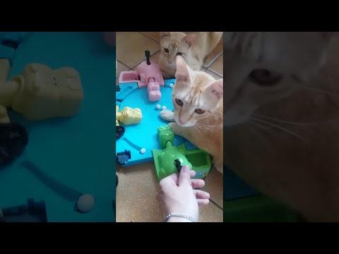 Cats Play Hungry Hungry Hippos || ViralHog
