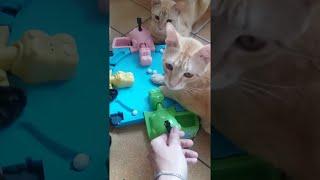 はらぺこカバさんのゲームを4匹でプレイする猫ズ。ルール無視だけど楽しいからいいのだ