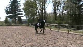 Equitazione Classica Dressage - Francesco Vedani - Insegnare il trotto medio