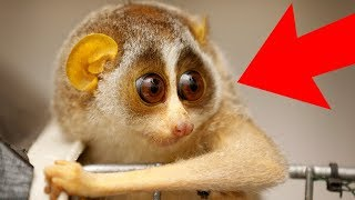 7 CUTE Animals That Can KILL You