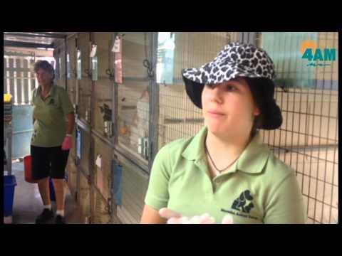 Mareeba Animal Refuge Cats
