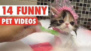 14 Funny Pet Videos 2016