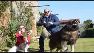 Кавказская овчарка Медведь России Минотавр