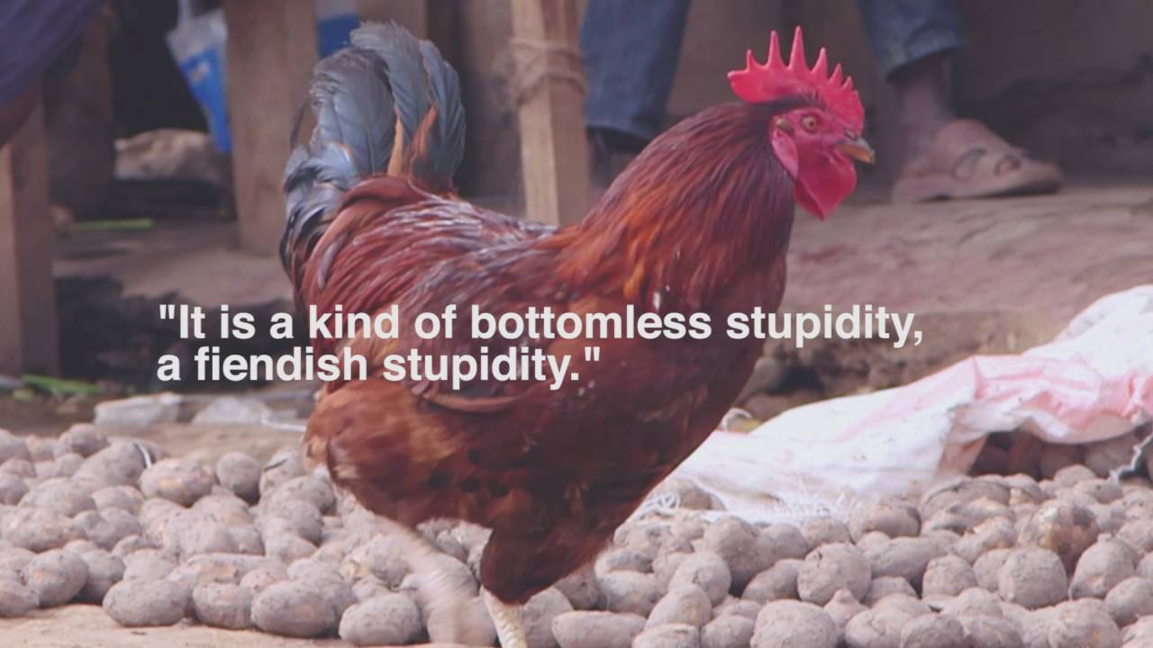 Chicken Quote: Werner Herzog Chicken Quote