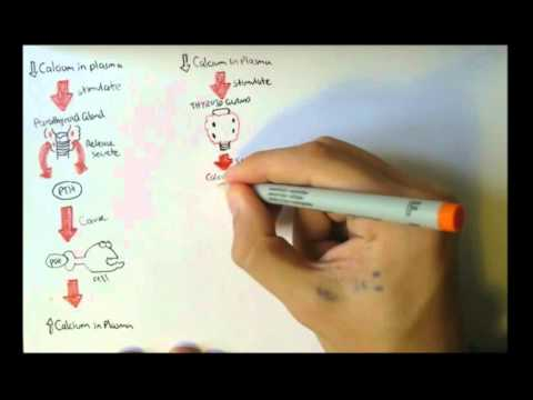 Homeostasis and why it is an