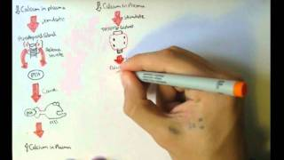 Bone Homeostasis (Calcium and Phosphate) Hormones