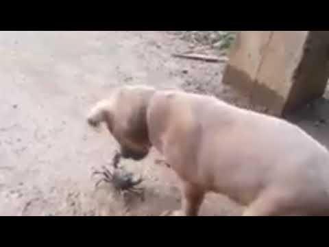 Bad Dog Braking Ringtone Mp3