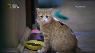 Эрмитажные коты!...