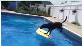 🤣 Funniest 🐶 Dogs and 😻 Cats - Awesome Funny Pet Animals Life Videos 😇