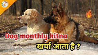 Dog monthly kitna kharcha ata hai / dog monthly expense / What is Monthly cost of keeping a dog