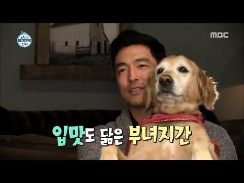 I Live Alone 나 혼자 산다 Daniel Henney's favorite food 'kimchi stew' 20161223