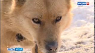 Отравитель собак из приюта «Ласка» ответит по статье «Жестокое обращение с животными»