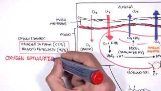 Respiration Gas Exchange