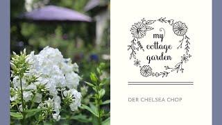 Chelsea Chop für üppige, langblühende Pflanzen