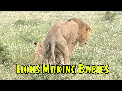 MAKING BABIES Trailer (2019) Romantic Comedy Movie from YouTube · Duration:  2 minutes 32 seconds
