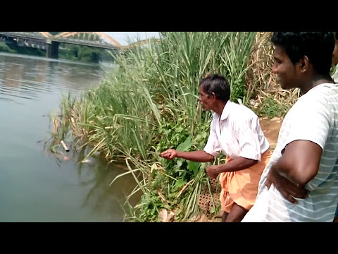 Kerala River Fishing (piravom) Gold Fish (kuyil)