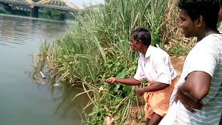Kerala River Fishing (piravom) Gold fish (kuyil)