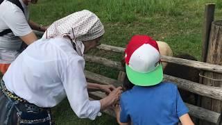 Минибандит Макар кормит овечек в Таллинне