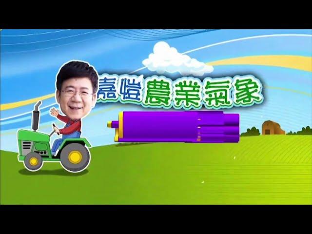 2020.08.10─嘉愷農業氣象週週報