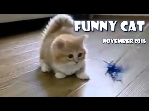 Funny cat videos 2015 try not to laugh or grin - P.01 in 11/2015 ✓