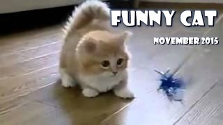 Top 15 Funny videos from Internet Try not to laugh or grin HARDEST