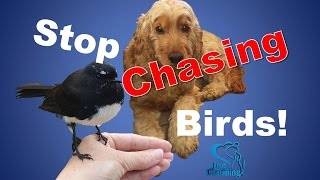 Teaching A Dog To Stop Chasing Birds - Phase One