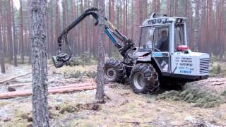 Thinning of pine stand with Vimek harvester nearby Engure