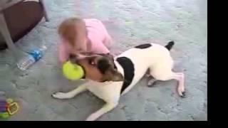Ребенок кусает собаку!