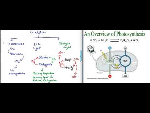 Biology - Photosynthesis for class X - ICSE, CBSE, IGCSE - Prashant Kumar