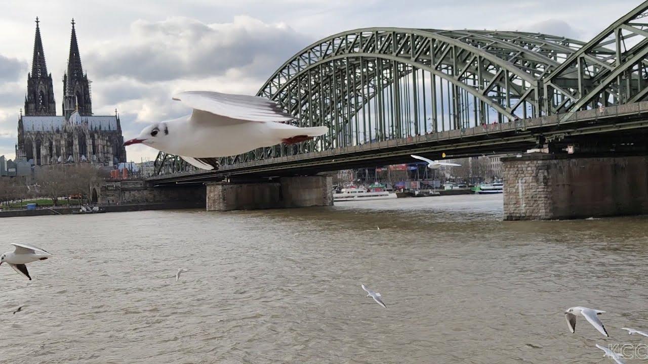 Wetter.Köln