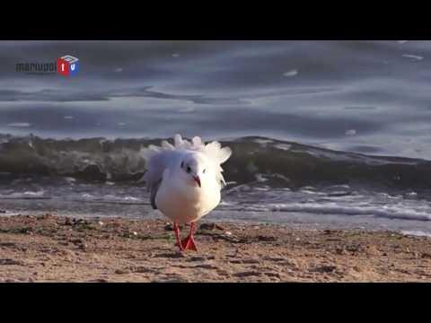 Экология Краснодарского края