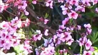 """FLORES & uma VALSA - Flowers & a Waltz / """"Called upon"""" Silent Partner"""