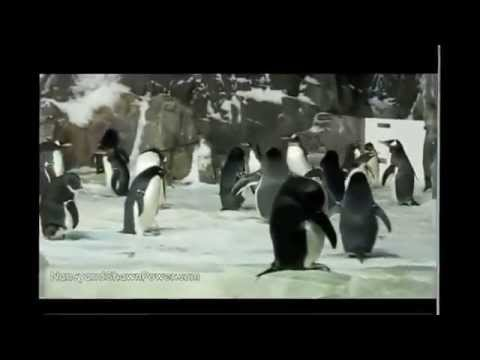 Video Documentary | Visiting California Travel | Travel Guide and Tips - SeaWorld San Diego Part 2