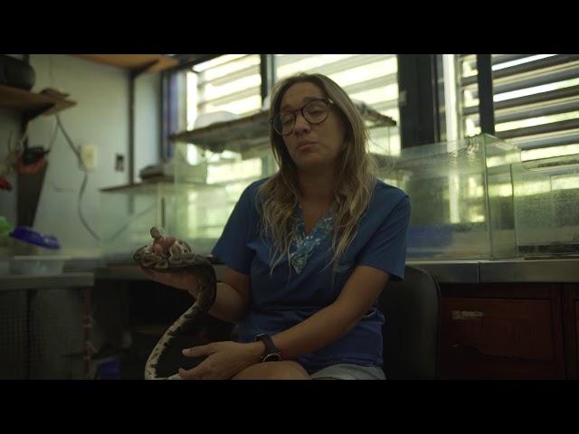 EN CARRERA | Veterinaria