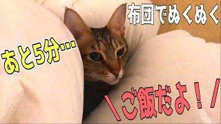 寝ている猫たちに「ご飯だよ!」と言ってみたら…! thumbnail