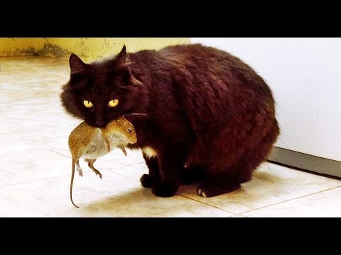 How To Stop A Cat Hunting