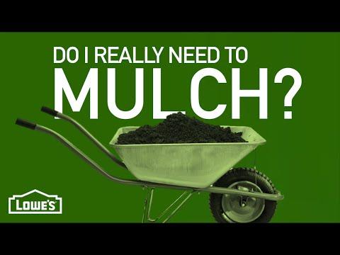 Do I Need To Mulch Around My Plants? | Gardening Basics w/ William Moss