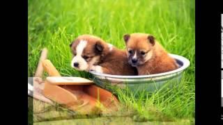 доставка корма для собак