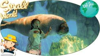เด็กจิ๋วเที่ยว Ocean Park ตอน10 สัตว์ขั้วโลกเหนือ แมวน้ำ วอลรัส [N