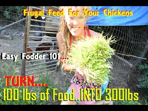 How To Feed Chickens For A Dollar A Day! Karl Hammer?
