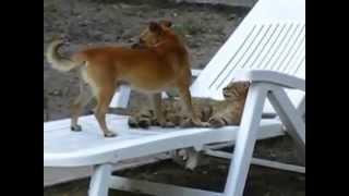 Собака вылизывает кота! Fun!