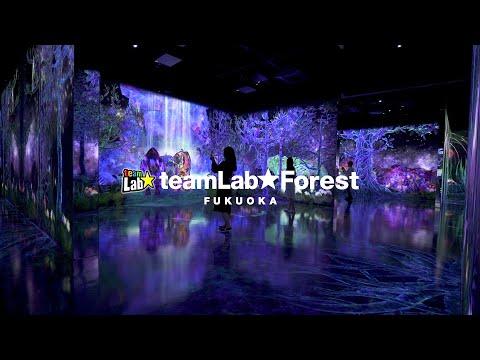 teamLab Forest Fukuoka - SBI SECURITIES Co., Ltd.