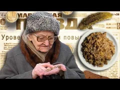 Мейн куны кошки и котята в Екатеринбурге Фото и цены